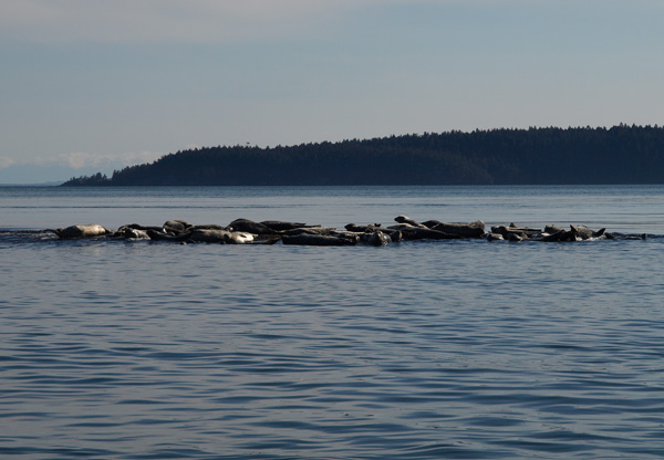 Seals on Whale and wildlife tour