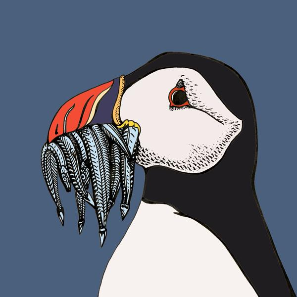 Freya Laughton -Puffin
