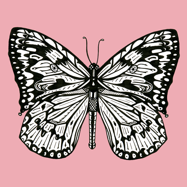 Pink Butterfly © Freya Laughton