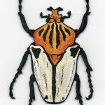 Goliath Beetle © Freya Laughton